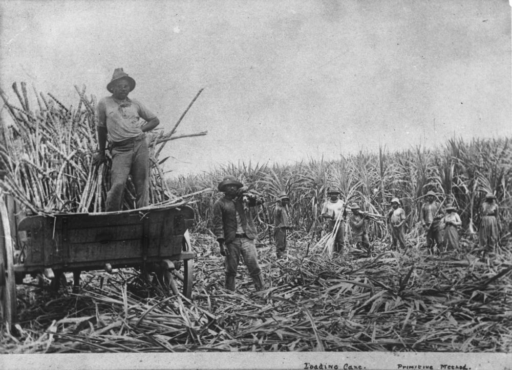 South-Sea-Islanders-labourers-loading-cut-sugar-cane-into-a-wagon-Queensland1