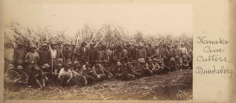 Canecutters at work at Bingera Platation near Bundaberg 1906 -slq